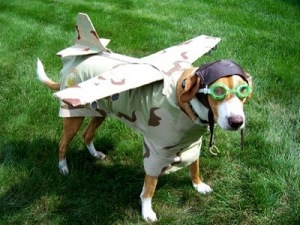 airplane-dog