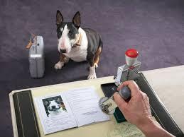 cane documenti